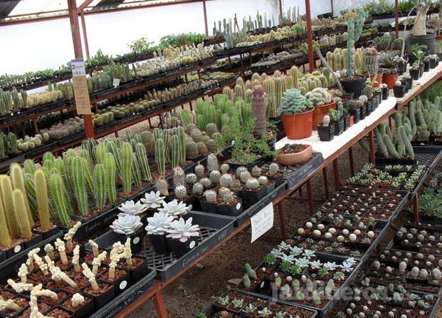 Im genes de vivero cactus for Viveros en queretaro