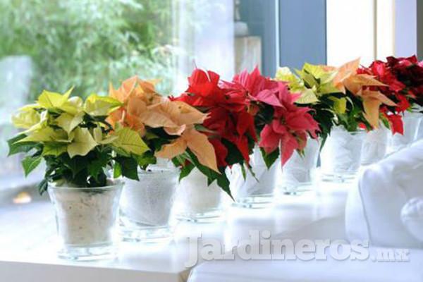 Decoracin con macetas y flores en el hogar Jardinerosmx