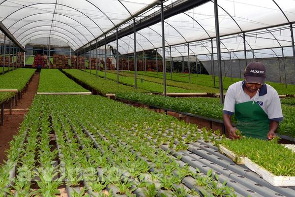Tipos de Jardines Jardinerosmx