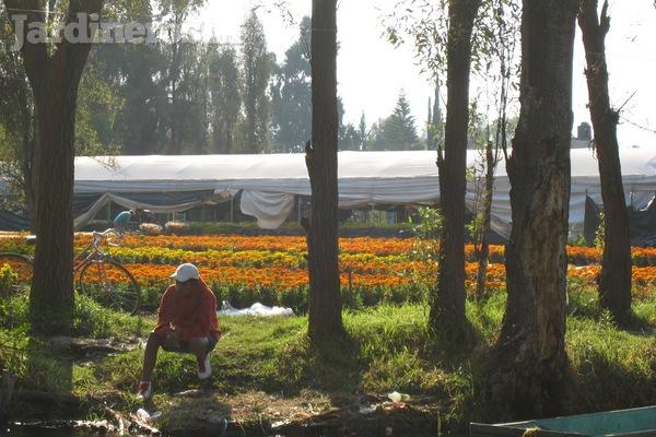 Las chinampas forma de cultivo milenaria vigente hasta for Jardineros en xochimilco