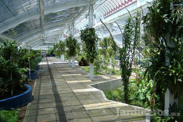 Jard n bot nico de chapultepec un espacio natural en la for Informacion sobre el jardin botanico