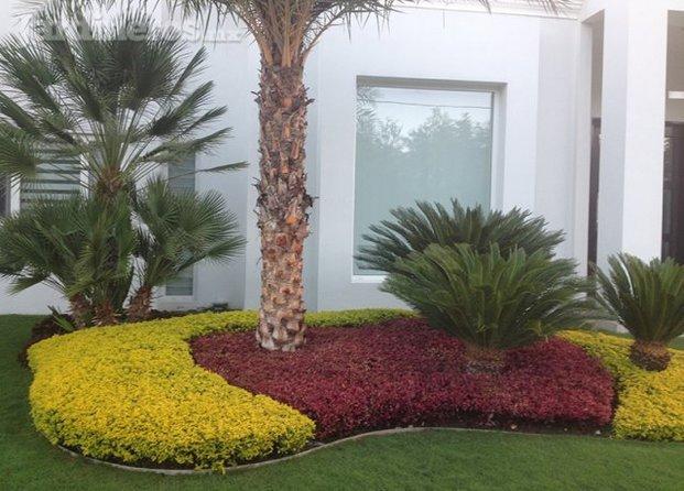 Viveros y pastos allende for Viveros de plantas de ornato