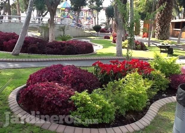 Vivero La Flor De Morelos Jardineros Mx
