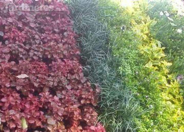 Im genes de jardineria vertical slp - Imagenes de jardineria ...