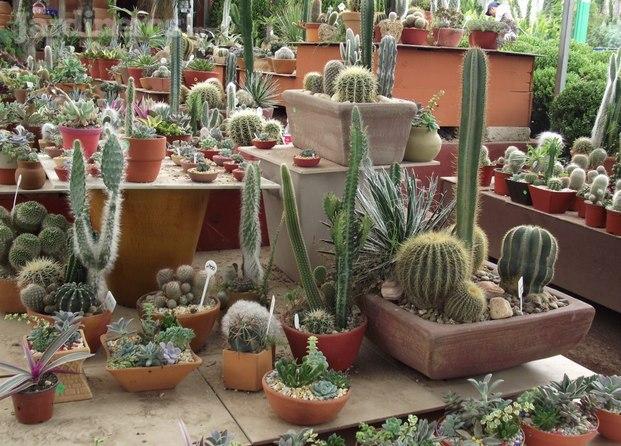 Viveros el olmo for Viveros de plantas de ornato