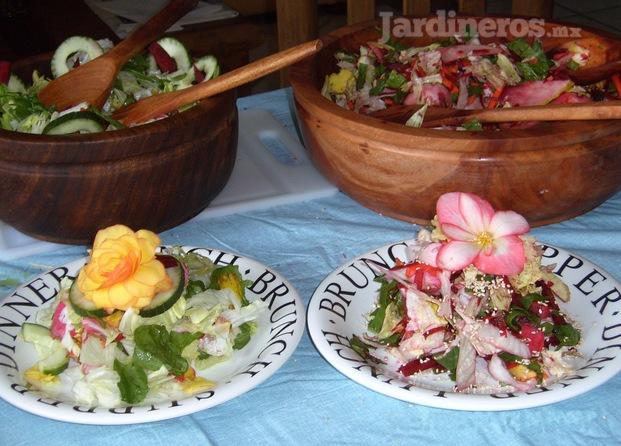Invernaderos xochimilco distrito federal for Jardineros en xochimilco