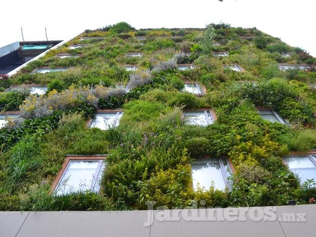 Techos verdes y jardines verticales for Techos verdes y jardines verticales