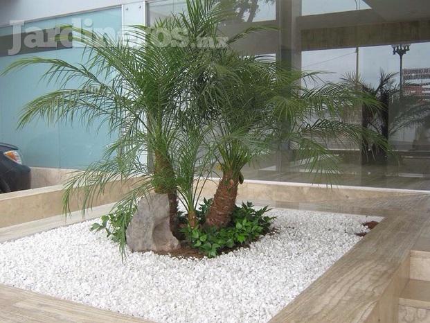 Reas verdes m rida for Piedras decorativas jardin precio