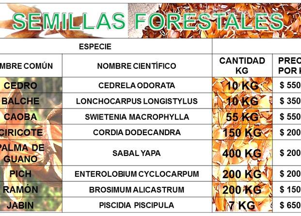 Im genes de vivero forestal m xico primero for Plano de un vivero forestal