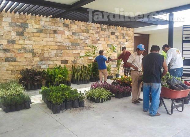 Vivero coploor for Viveros de plantas de ornato